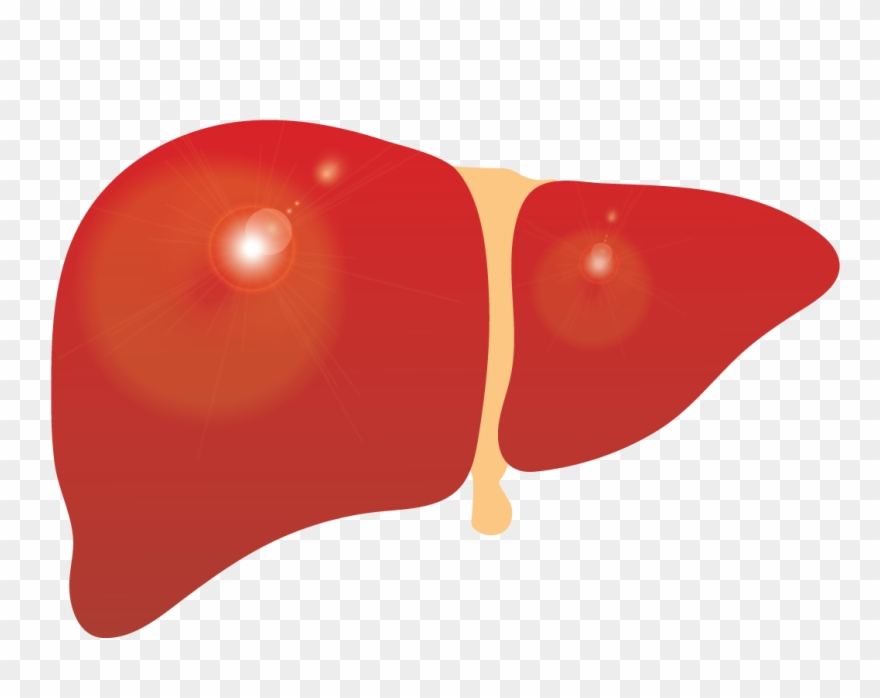 clip art royalty free download Liver clipart. Cirrhosis png download