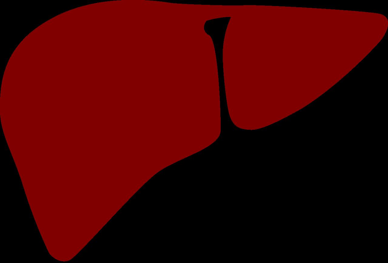 free download Liver clipart. File noun cc red