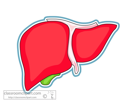 image black and white download Human free download best. Liver clipart body clipart.