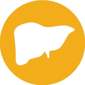png library download Liver clipart liver transplant. Overview center uf health.