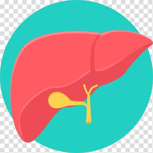 image royalty free stock Liver clipart liver transplant. Transplantation computer icons medicine.