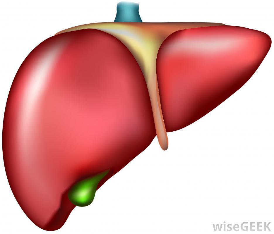 clip art library stock Cancer transparent . Liver clipart liver transplant.