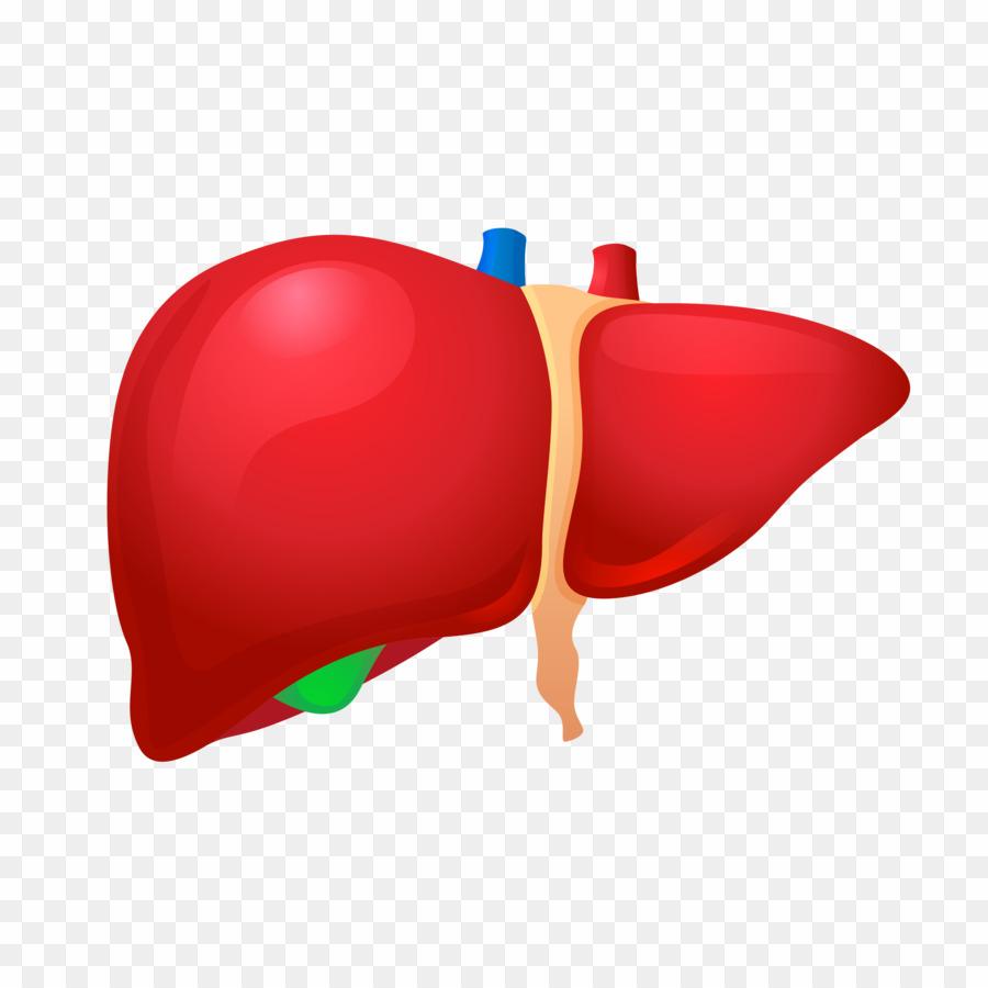 jpg royalty free stock Liver clipart liver transplant. Logo png transplantation .