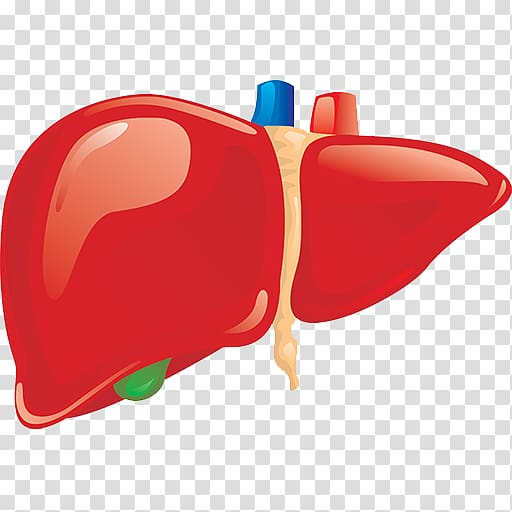 image black and white Liver clipart realistic. Human body organ gallbladder.