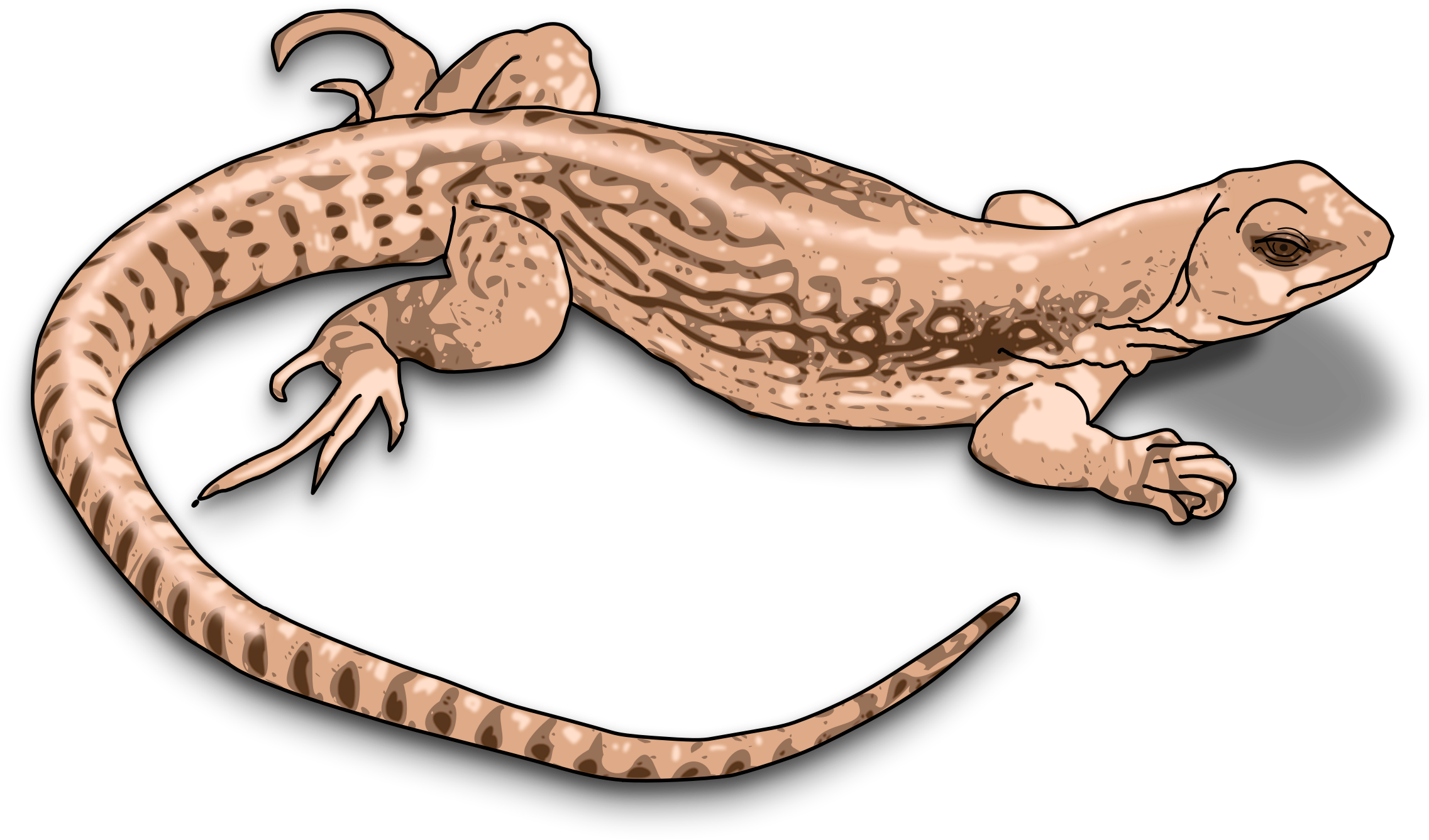 banner stock Monitor outline free on. Lizard clipart diagram.