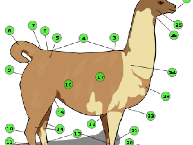 clip royalty free library Llama clipart colorful. Free on dumielauxepices net.