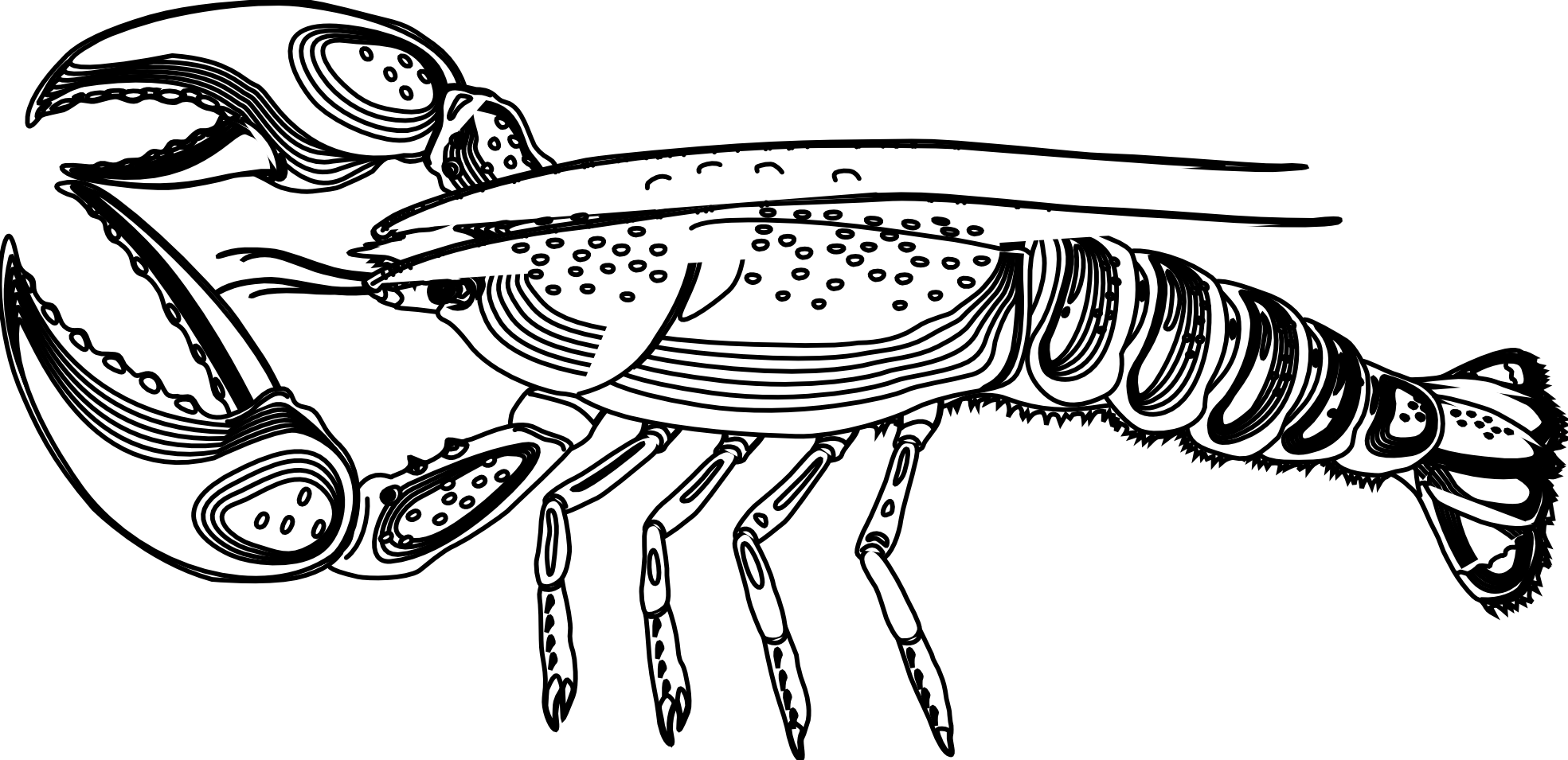svg black and white library Png transparent pluspngcom artfavor. Lobster clipart black and white