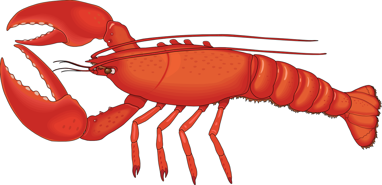 vector royalty free library Lobster Clip Art Images