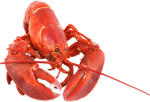 graphic free library lobster transparent translucent #114231869
