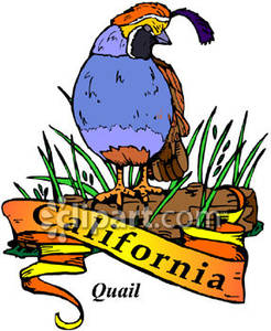 banner transparent library Logs clipart bird. State of california valley.