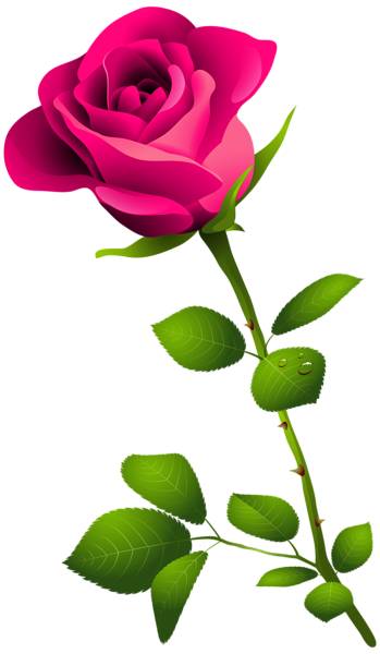banner freeuse stock Pink Rose with Stem PNG Clipart Image