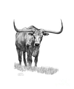 picture royalty free stock Longhorn Bull Drawing at PaintingValley