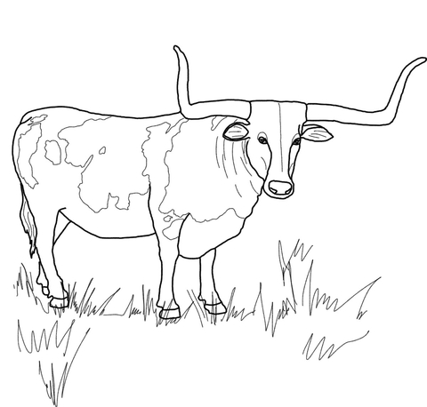graphic royalty free download Texas Longhorn Steer coloring page