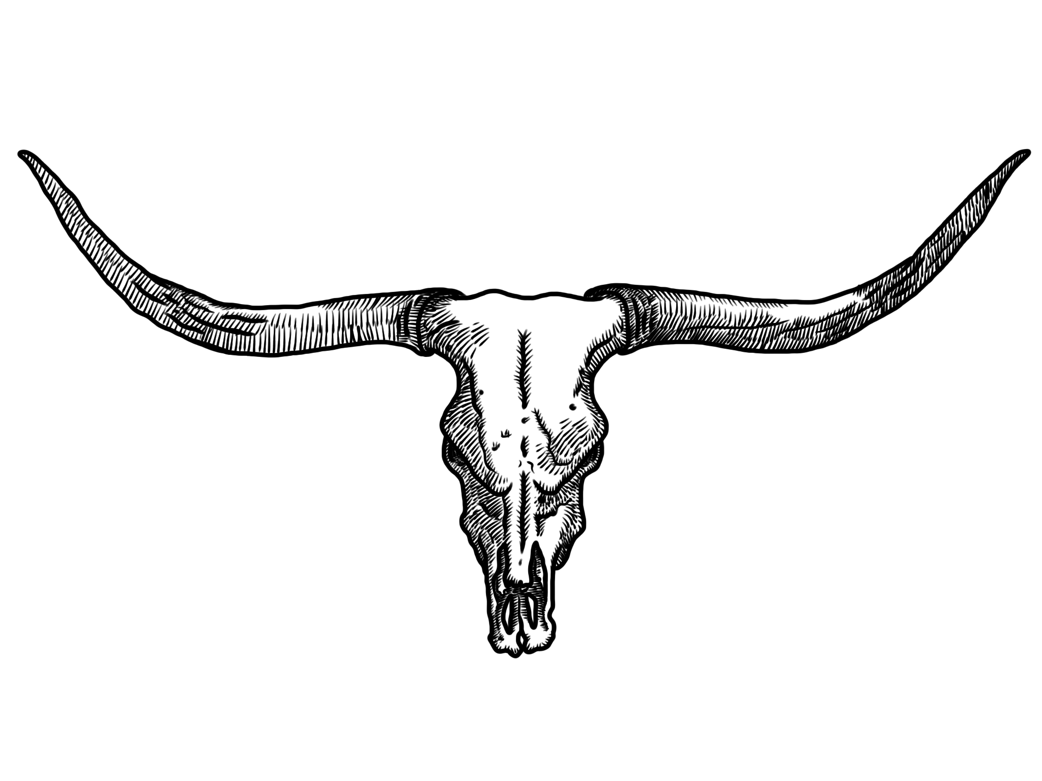 picture download Longhorn skull clipart. Free cattle cliparts download.