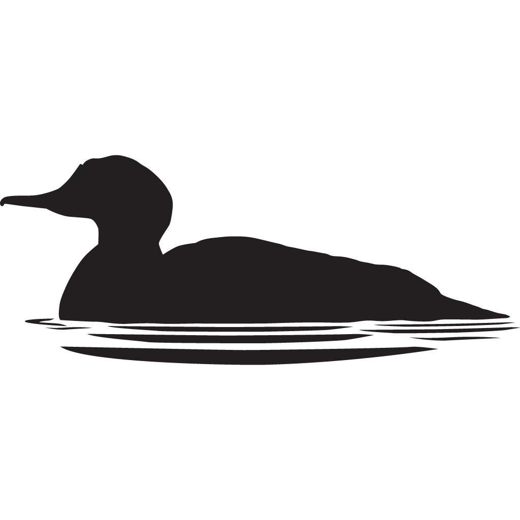 banner royalty free download Common Merganser Overview