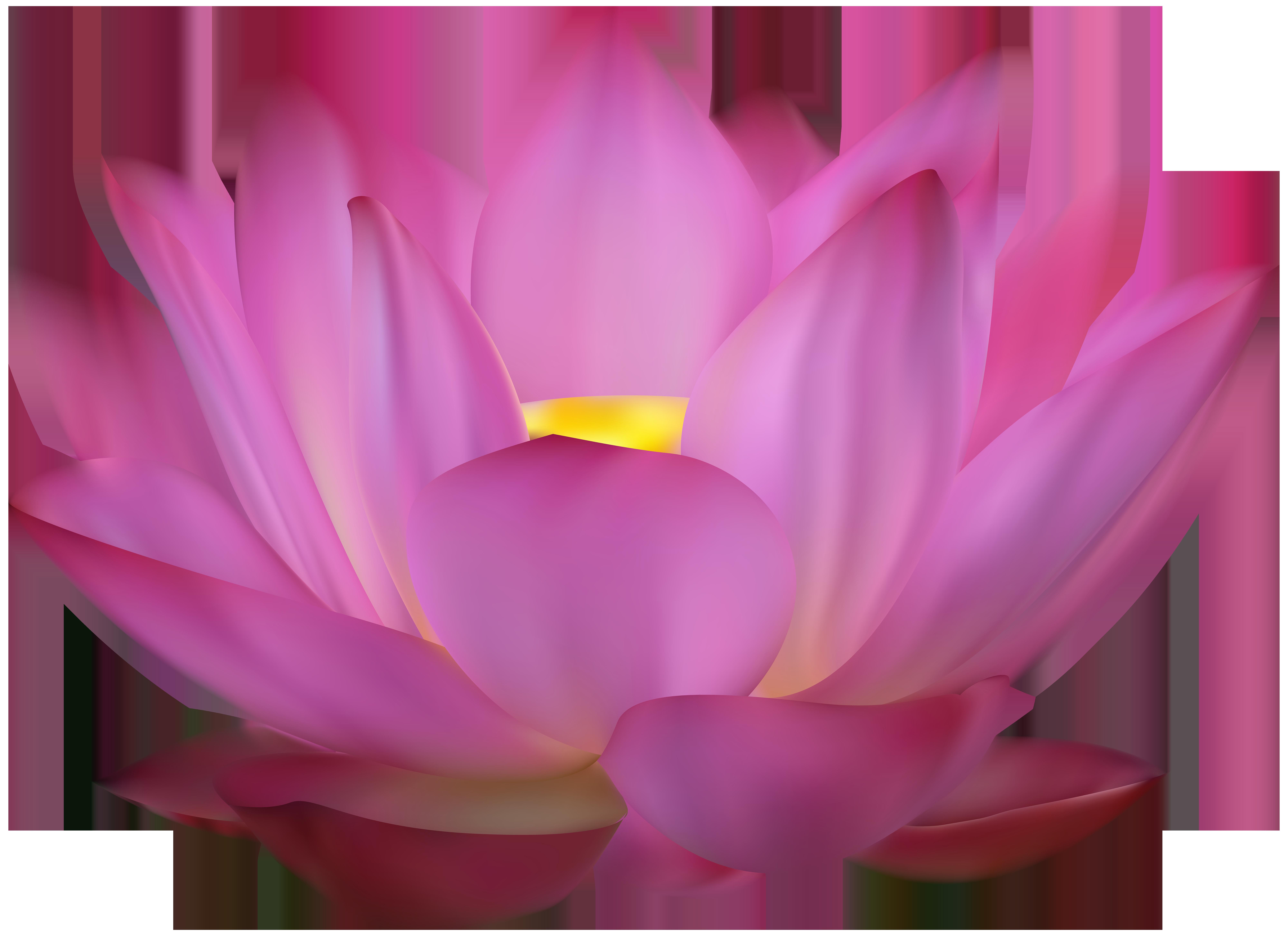 png transparent stock Lotus clipart. Pink clip art png.