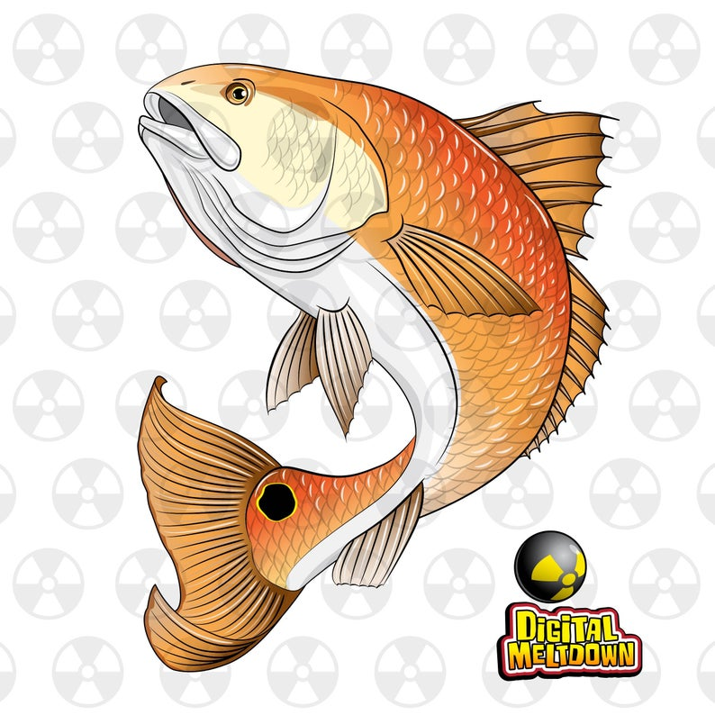 png freeuse download Louisiana clipart red. Wildlife vector fish drum.