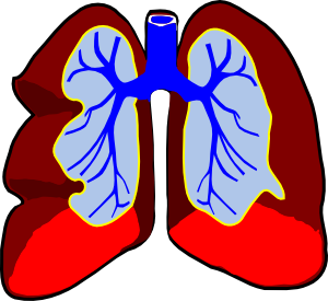 clipart black and white library Lungs clipart. Healthy clip art at.