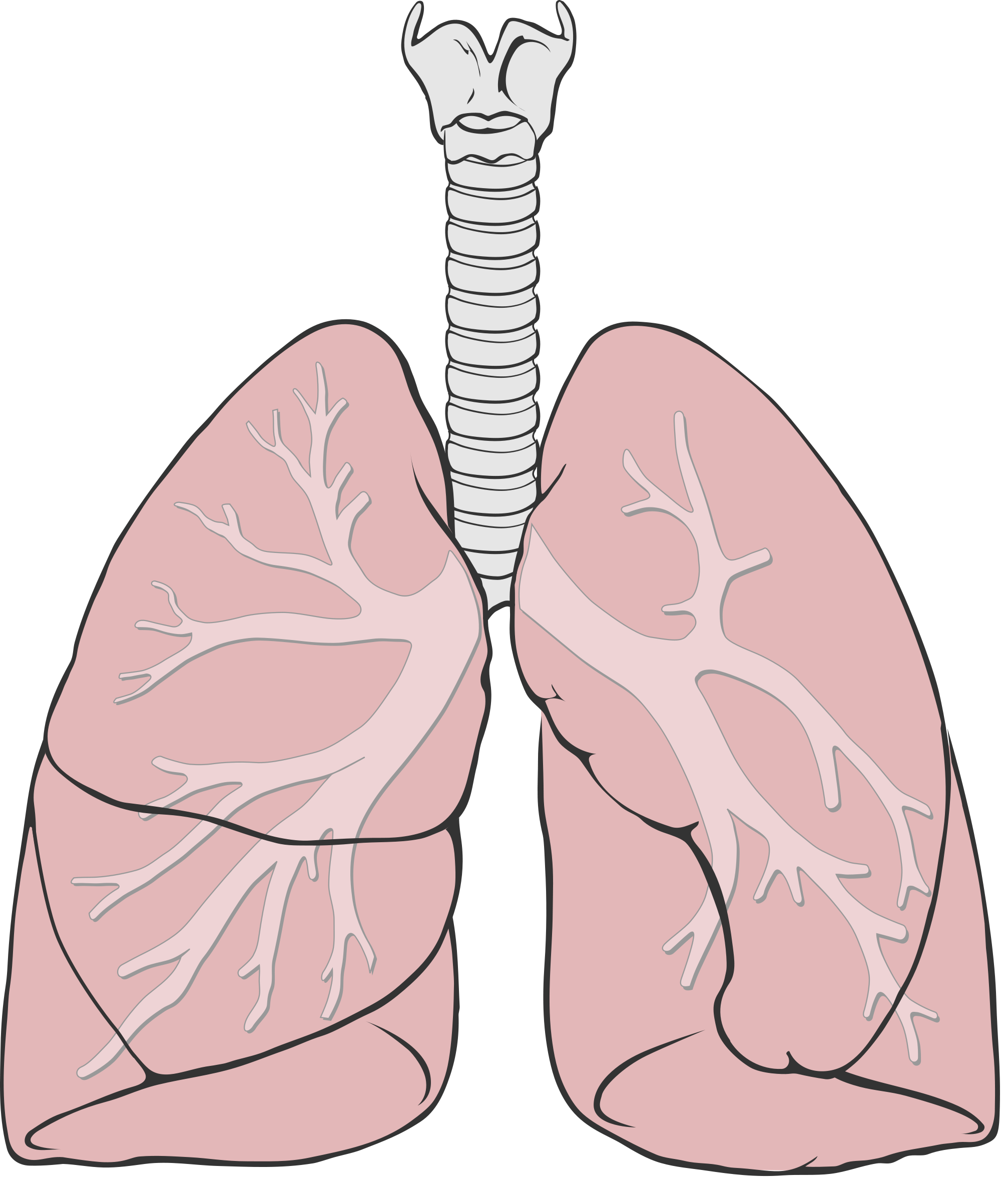svg library library File diagram simple svg. Lungs clipart.