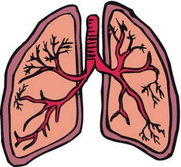 jpg royalty free stock Lungs clipart. Free cliparts download clip