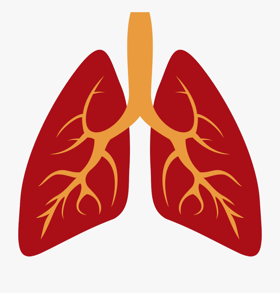 image royalty free stock Png human lung icon. Lungs clipart