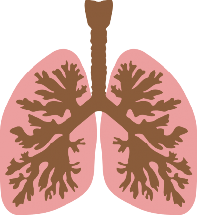 picture transparent library Download free png transparent. Lungs clipart.