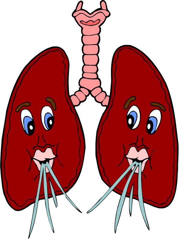 image stock Lungs clipart for kids. Clip art library