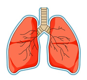 image black and white stock Lungs clipart for kids. Free lung cliparts download