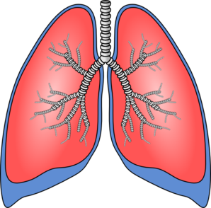 graphic royalty free Lungs clipart human lung. Clip art at clker.