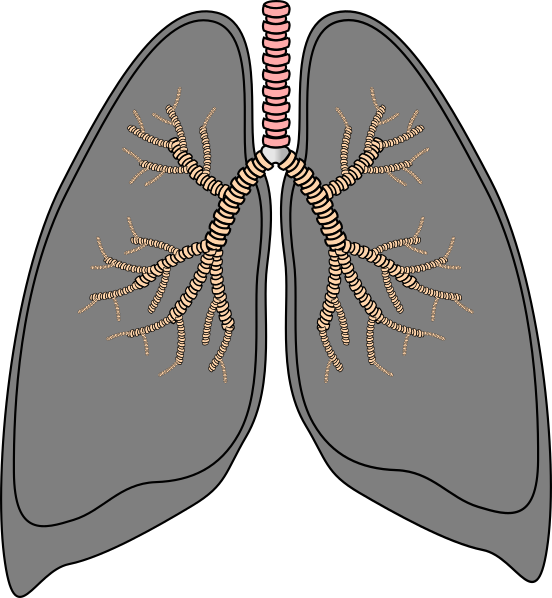 vector library stock Smokers clip art at. Lungs clipart lung smoker.