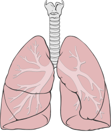 graphic transparent library Drawing at getdrawings com. Lungs clipart lung smoker.