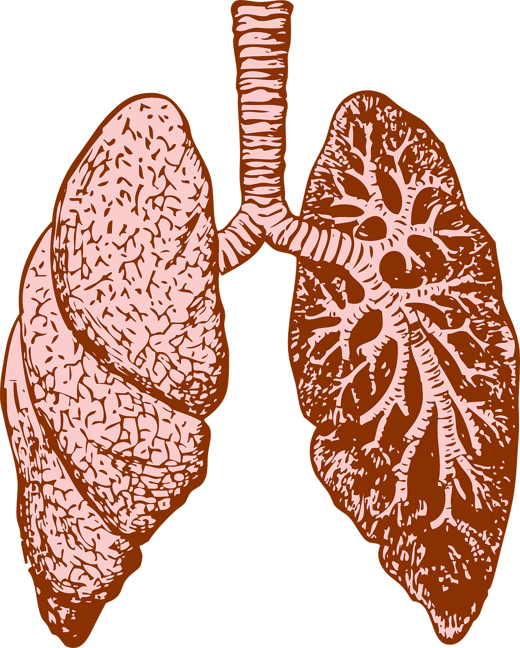 svg freeuse download Consume cannabis while keeping. Lungs clipart lung smoker.