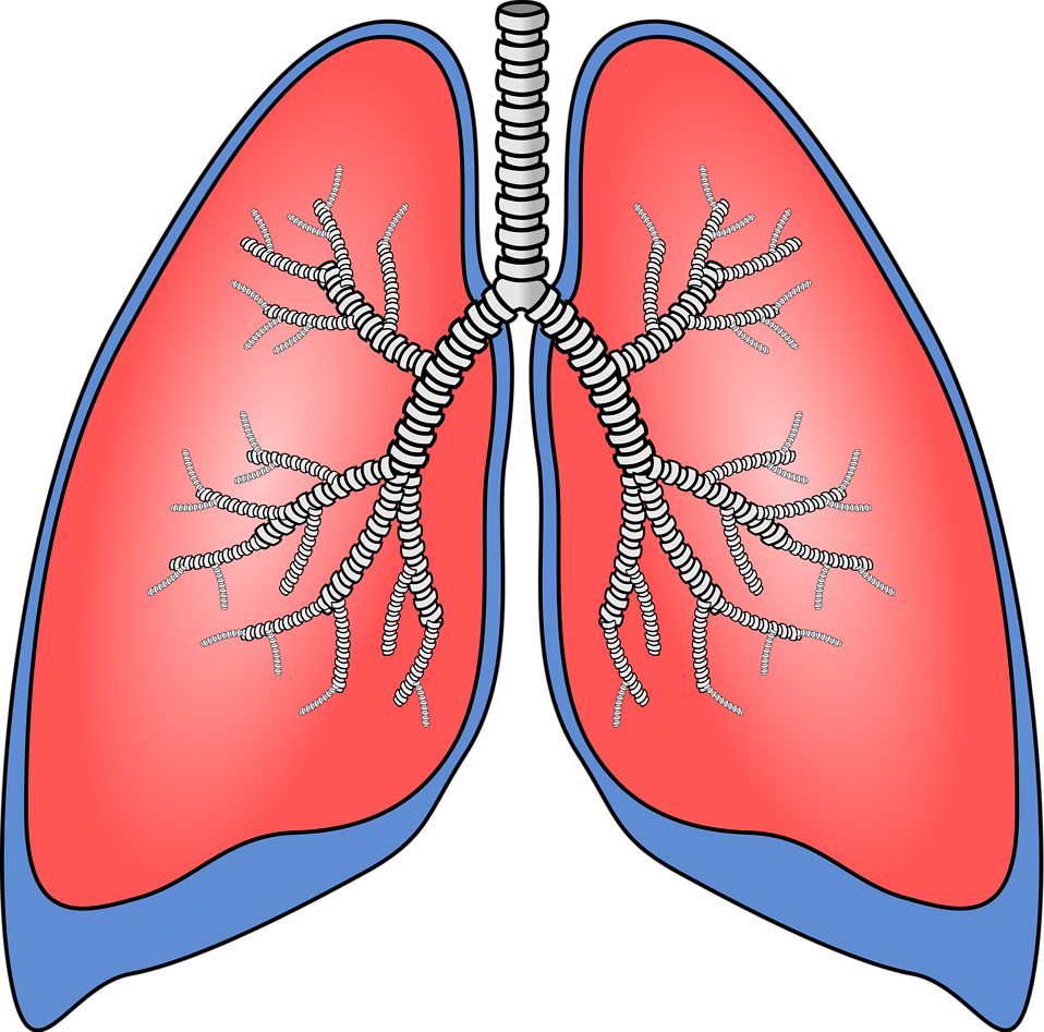 svg royalty free download Find out which of. Lungs clipart black and white