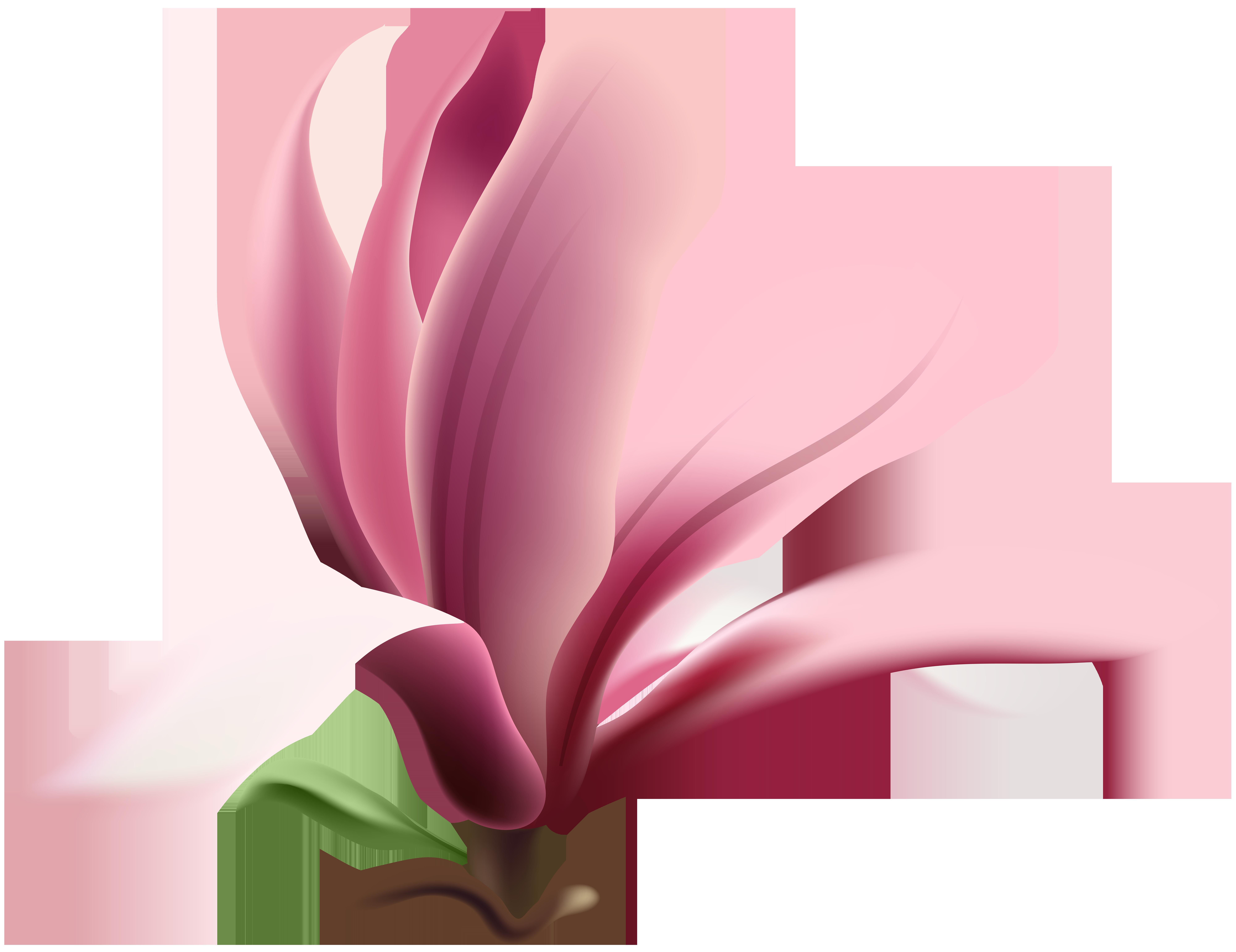 image transparent Magnolia clipart. Transparent png clip art.
