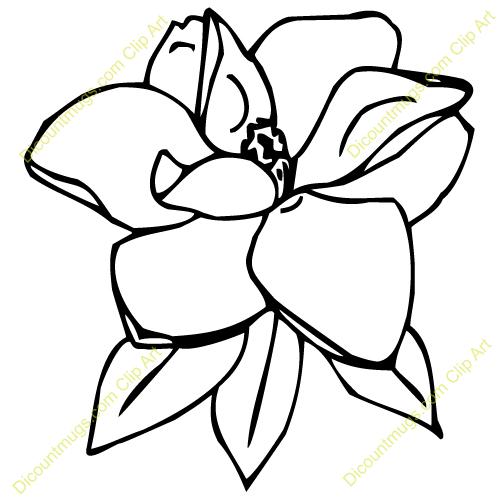 picture transparent download Magnolia clipart. Flower clip art branch.