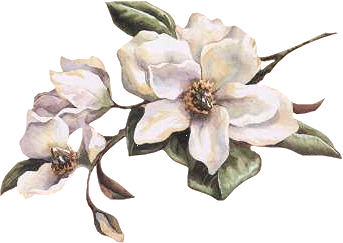 clip art library download Magnolia clipart. Services.