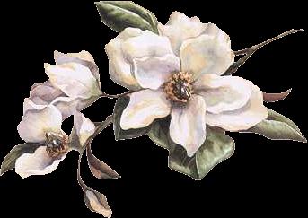 clip art library download Magnolia clipart. Services