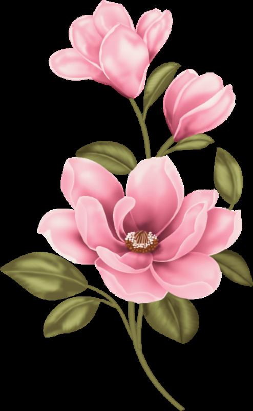 clip art  dfa d ac. Magnolia clipart.