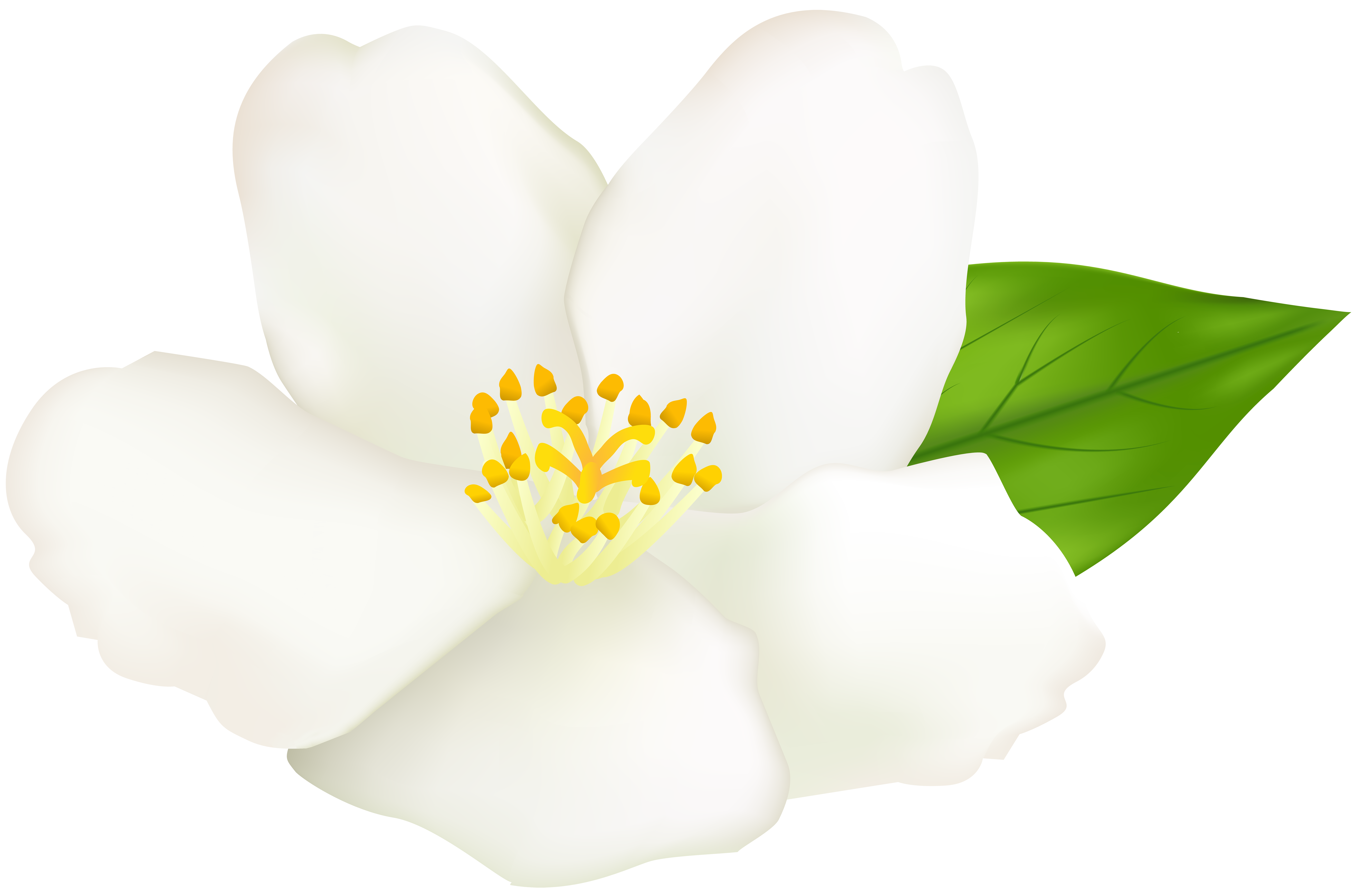 black and white stock Flower at getdrawings com. Magnolia clipart outline.