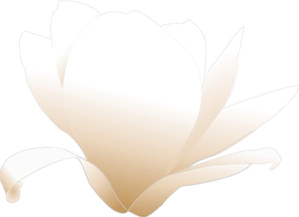 jpg freeuse White clip art at. Magnolia clipart outline.