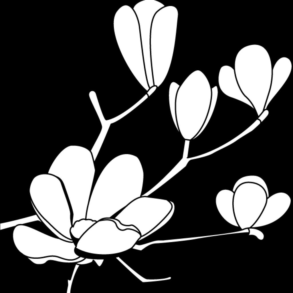 banner freeuse stock Magnolia clipart outline. Flower hatenylo com clip.