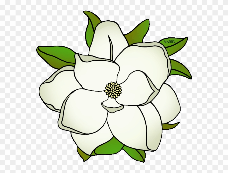 banner free Magnolia clipart outline. State flower of mississippi.