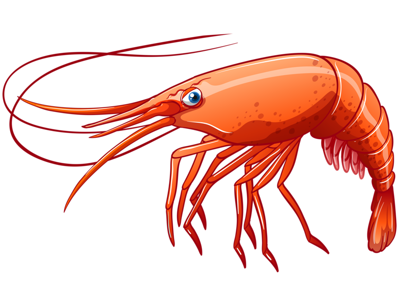 clipart royalty free download seafood clipart krill #82966560