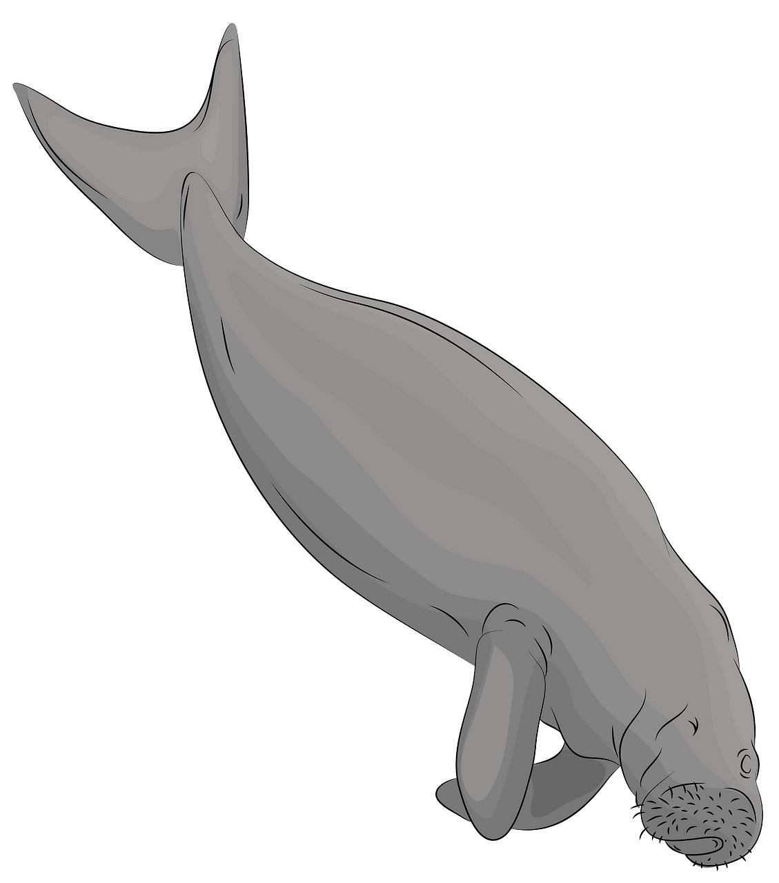 graphic black and white Free download creazilla . Manatee clipart dugong