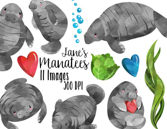 clip transparent library Manatee clipart dugong. Download for free png