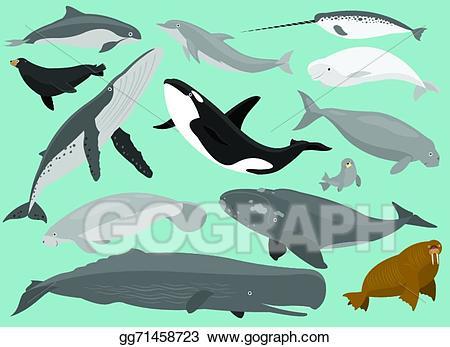 image royalty free Vector stock mammals illustration. Manatee clipart marine mammal.