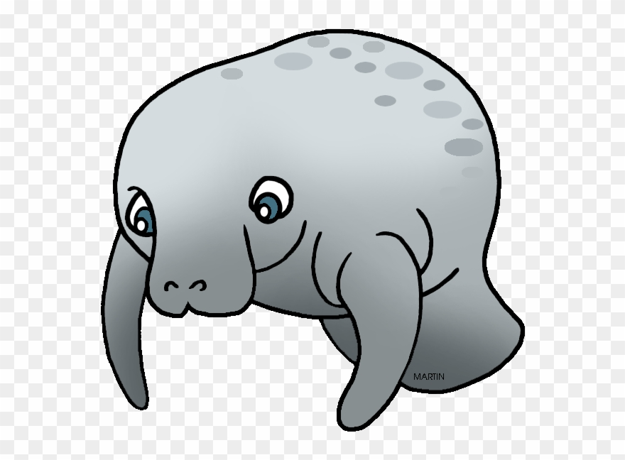clipart free download Manatee clipart marine mammal. Png images free library.