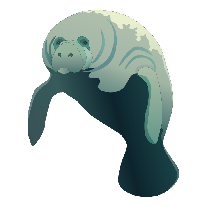 clip art freeuse library Manatee clipart vector. It s manateeappreciationday show.