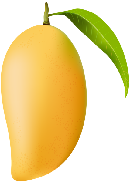 png royalty free download Mango clipart. Png clip art image
