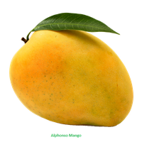 svg transparent Download free png photo. Mango clipart border